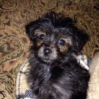 Renee's pup